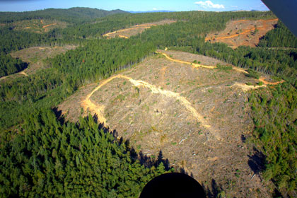 Industrial clearcuts in northern California