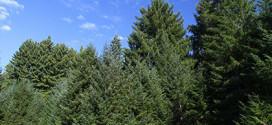 Forest on Artesa Annapolis property
