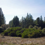 Artesa-meadow-manzanita-redwood