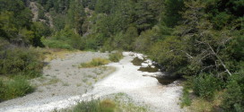 Wheatfield Fork, Gualala River, upstream of the Annapolis Road bridge at Skagg Springs Road, August 17, 2013