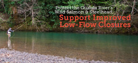 Protect Threatened Salmon & Steelhead: Support Improved Low-Flow Closures
