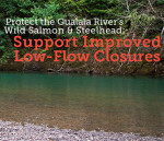 Protect-the-Gualala-Rivers-Wild-Salmon-and-Steelhead2