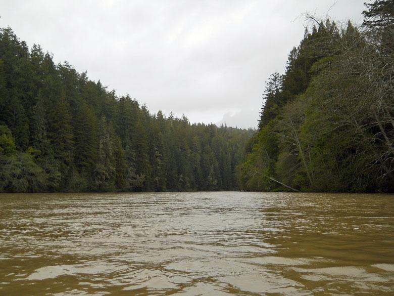 Gualala River floodplain