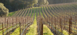 Activists see Sonoma County winegrowers' proposed bill as a 'water grab'