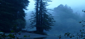 Gualala River in fog