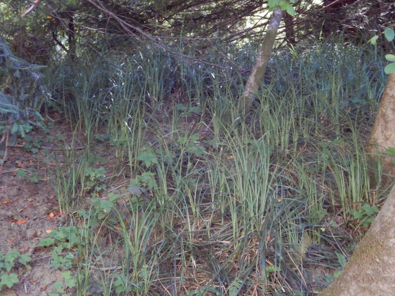 Dogwood - Slough sedge wetland - 5459