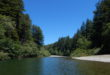 Wild & scenic Gualala River runs thorough Dogwood - 5416