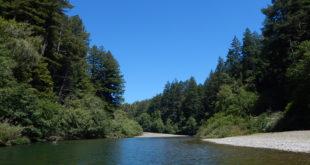 Wild & scenic Gualala River runs thorough Dogwood - 5416