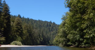 Gualala River riparian forest