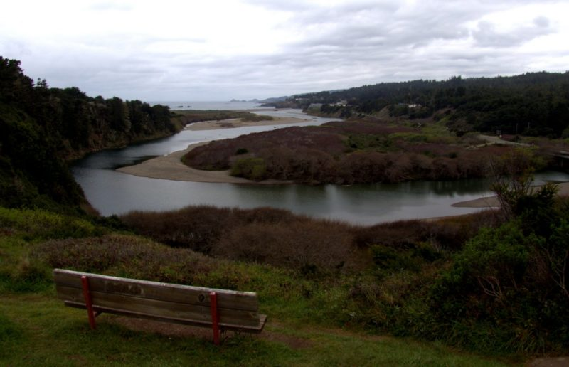 Even though its winter, the Gualala River Estuary is in Bud, by Robert Scarola