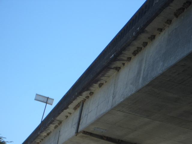 Kayaking Gualala River Bridge with Cliff Swallow nests