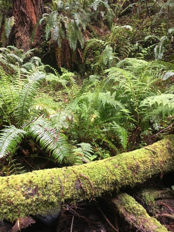 28. Mosses drape fallen logs