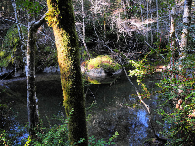 River at Soda Springs Reserve, by Bob Rutemoeller