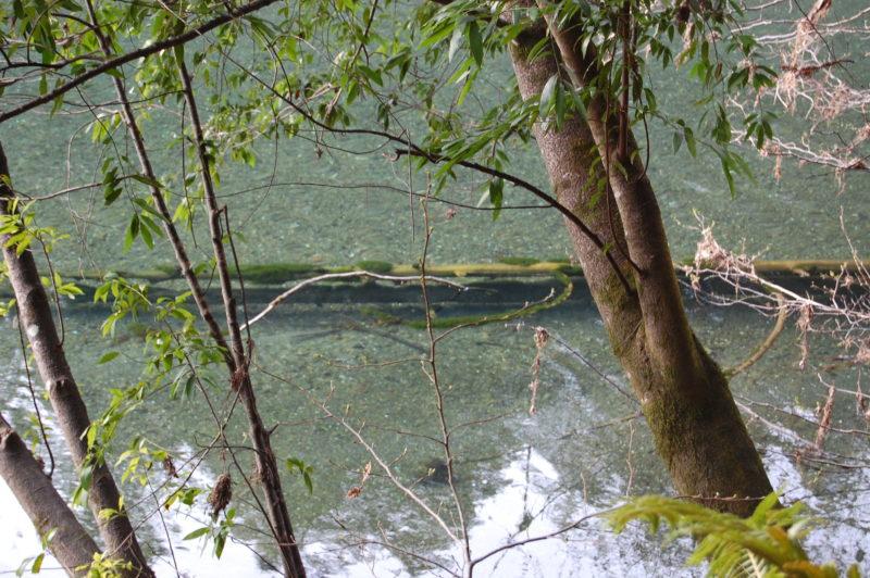 17. Sunken Bay Logs Become Habitat for Fish