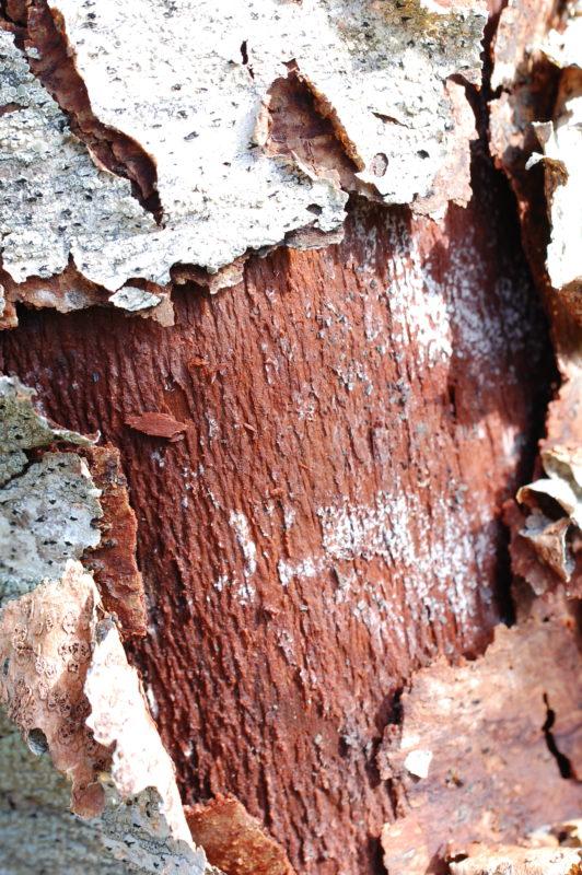 6. Red Inner Bark