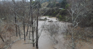 Feb 27, 2019: Wheatfield Fork Gualala River, Valley Crossing, Annapolis Road; view to west, north side. The floodplain riparian woodland here is deeply submerged, about 5 feet or more.