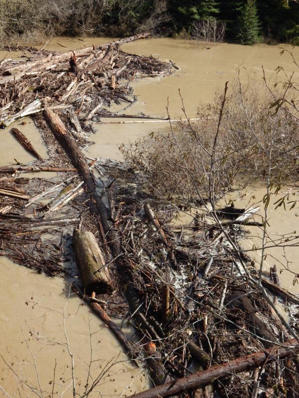 Log debris jam, South Fork bridge, looking East, Feb 2019