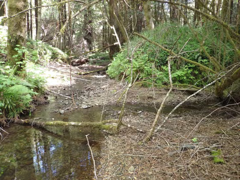 Frissell-Confluence-of-Big-and-Little-Pepperwood-Creeks