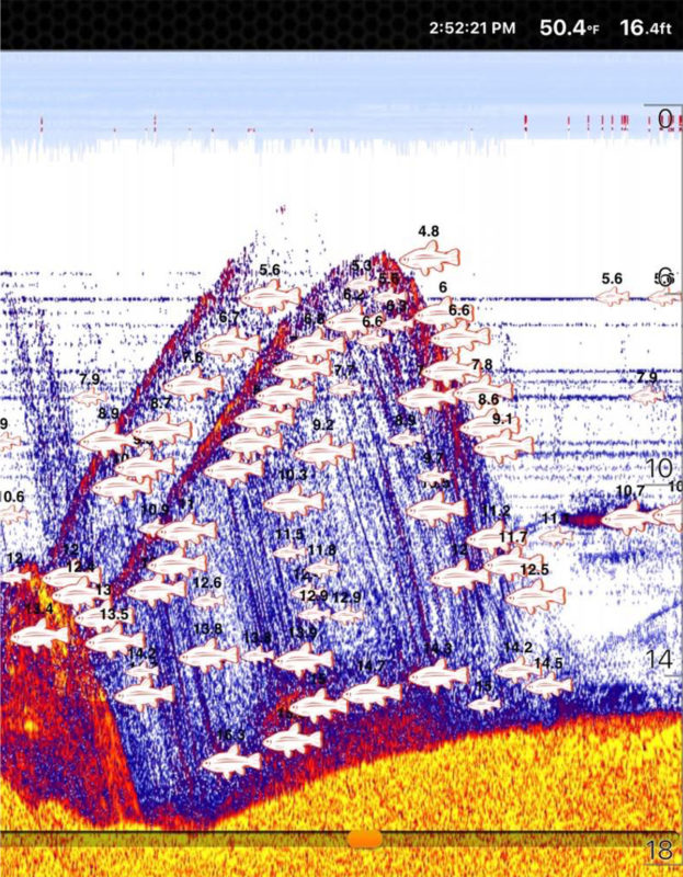 Frissell-Sonar-fish-finder-image-taken-at-Gualala-River-Estuary