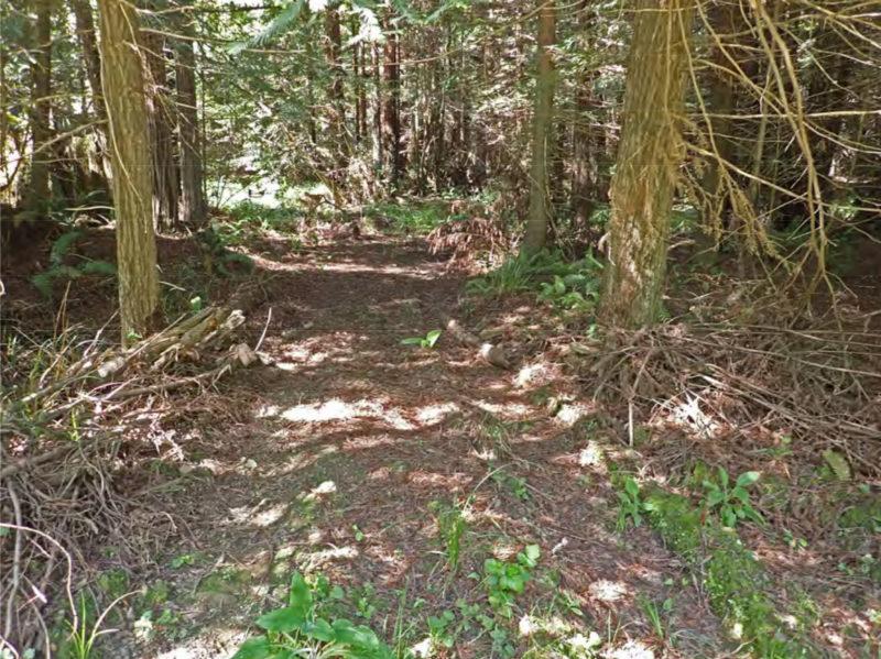 Frissell-skid-trail-fords-the-floodplain-springbrook