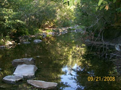 9/21/08 In Buckeye Creek, water is flowing continuously and steelhead are abundant