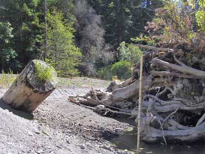 8/31/08 Pool formed around natural old-growth redwood rootwads and boulders, usually three feet deep, even in dry years, now less than a foot deep