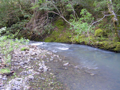 Fuller Creek, May 2009