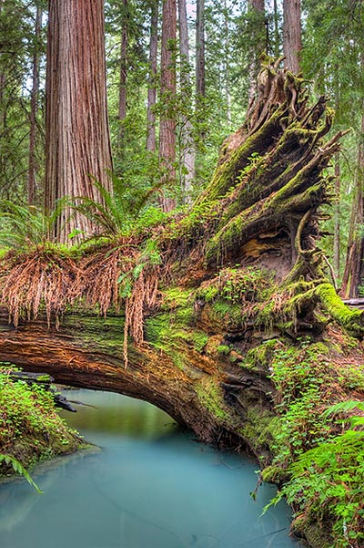 Fallen Giant, photo by Scott Chieffo