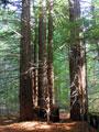 Artesa Sonoma timberland conversion