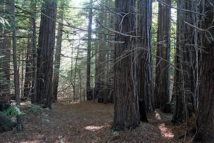 View of Artesa's property in northwestern Sonoma County