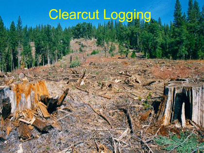 Clearcut Logging - Sierra Club presentation