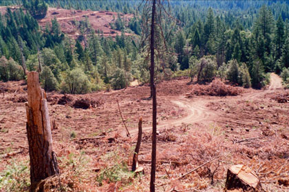 Clearcutting - Sierra Club presentation