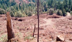 Clearcutting in California