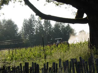 Pesticide application on Annapolis vineyard