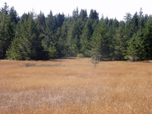 Artesa-meadow-and-young-forestPA010140